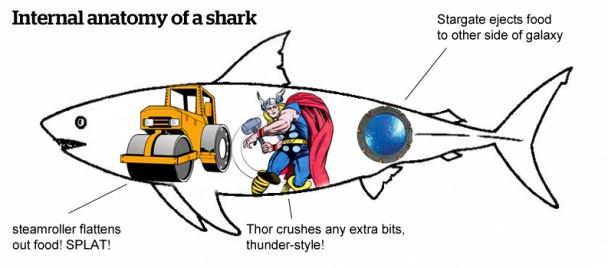 Anatomy Of A Street Shark